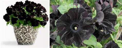 blackest flower garden design