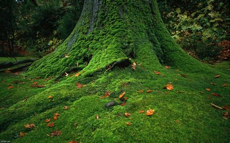 Images Of Moss Moss Covered Stones Trees Hd Nature Wallpapers Hd