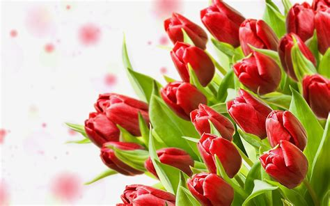 bouquet red tulips flowers hd wallpaper wallpaperscom