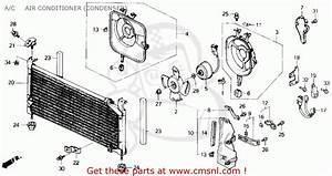 Honda Civic Cooling Diagram For 1989  Honda  Free Engine