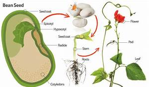 Superior Sources  Why Buy Zursun Beans   Kitchen Detail