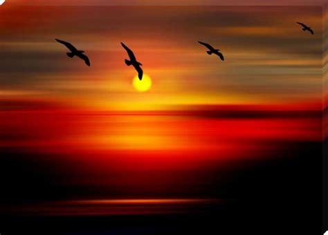 flying birds enjoing  sunset point sunset prints