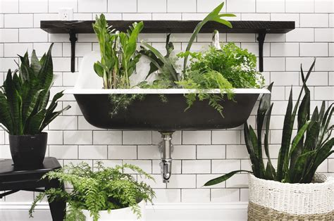 three plants that thrive in low light bathrooms