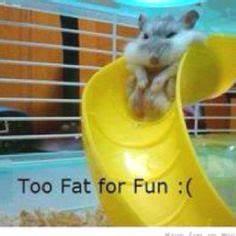 1000+ images about Hamster on Pinterest | Hamsters, Jazz ...