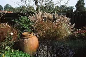 Winterharte Gräser Garten : gr ser f r den garten pflanzen pflegen ~ Michelbontemps.com Haus und Dekorationen
