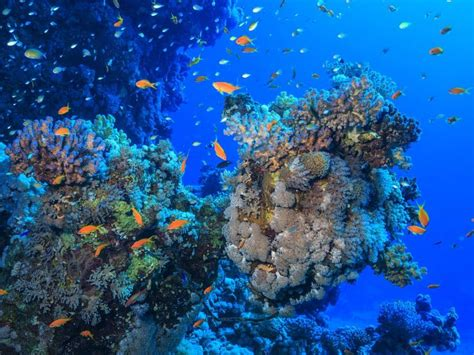 stretching  yucatan  honduras  mesoamerican reef