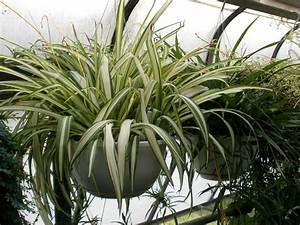 Plantes D39intrieur Faciles D39entretien