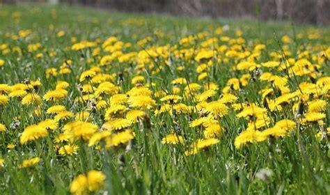 synonyme cuisine régalez vous avec le miel de fleurs de pissenlit