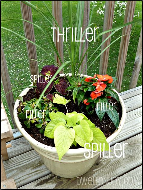 Tips For Beautiful & Balanced Container Gardens  Dwell On Joy