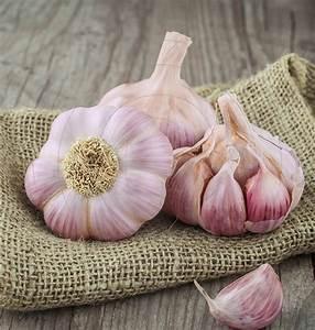 Planter Ail Rose : acheter l 39 ail sativum rose en ligne pour ~ Nature-et-papiers.com Idées de Décoration