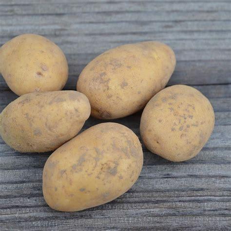 pomme de terre bernadette ab ferme de sainte marthe