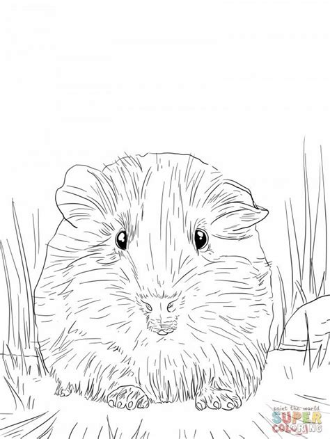 Cute Guinea Pig Portrait Coloring Online Super Coloring