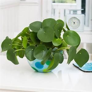 Zimmerpflanzen Pflege Tipps : 177 besten indoor pflanzen pflege tipps bilder auf ~ Lizthompson.info Haus und Dekorationen