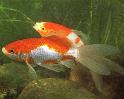 reproduction poisson en aquarium 28 images d 233 co aquarium poisson la reproduction des