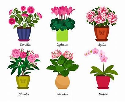Interior Flores Macetas Kalanchoe Flowers Plantas Premium