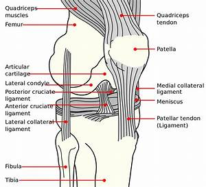 The Thumb Ligaments Diagram