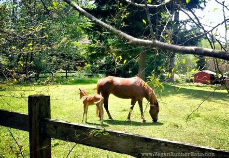 horses vegan changes veganrunnereats