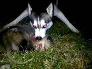Possum Bite   www.pixshark.com - Images Galleries With A Bite!