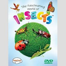 Fascinating World Of Insects  Brainfood Learning