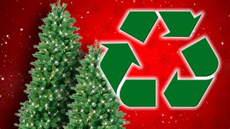 waste management christmas trees waste management recycles trees the coast news