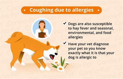 Dog Coughing Causes Natural Remedies Canna Pet