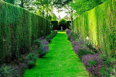 Da realizzare in doppia fila; Siepi da giardino, come realizzarle e renderle perfette