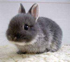 兔子 - 0983204240a