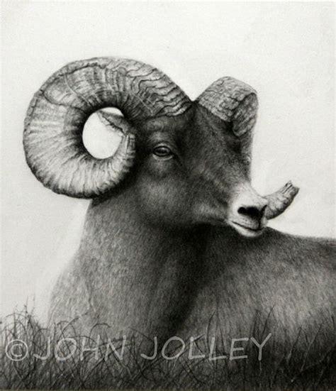horns drawings  animal drawings  pinterest