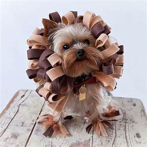 7 most creative costumes for your pet