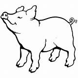 Pig Coloring Smell Nice Pot Something Cartoon Pages Template Porco свинья Clipart Colouring Outline Coloringsky Clip Farm Bellied Animal Sketch sketch template