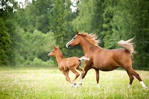 Facts About Foals | Animals - mom.me