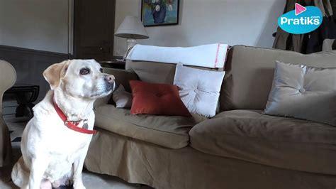 empecher un chien de monter sur le canap comment empecher chien de monter sur le canape 28 images