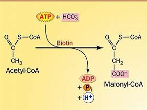 Fatty Acid Metabolism Initiation Step