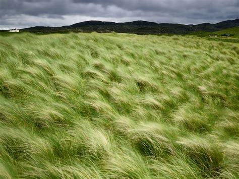 20100924 Beach Grass, Scotland  네이버 블로그