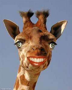Smiling Giraffe Pictures - Freaking News