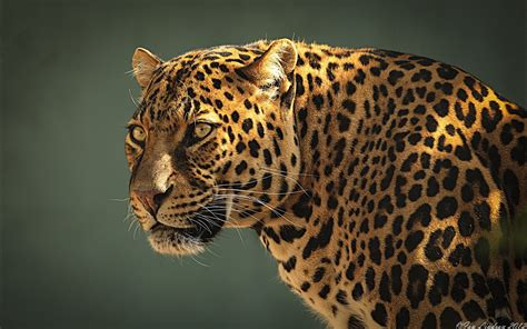 Jaguar Backgrounds by Jaguar Hd Wallpaper And Background Image 1920x1200