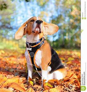 Music dog stock photo. Image of earphones, white, jiving ...