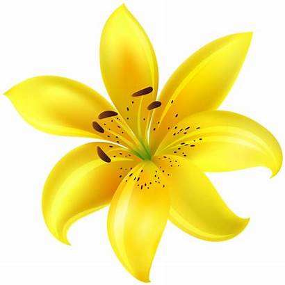 Yellow Flower Clip Clipart Flowers Lily Yopriceville