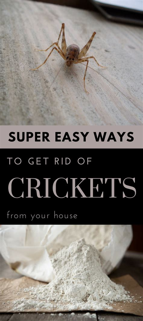 easy ways to get rid of crickets from your house