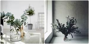 Eucalyptus Plante D Intérieur : 6 it plantes d interieur 2015 quartier cr ativ ~ Melissatoandfro.com Idées de Décoration