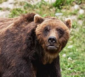 Bears: Tips From A Controversial Expert | GearJunkie  Grizzly