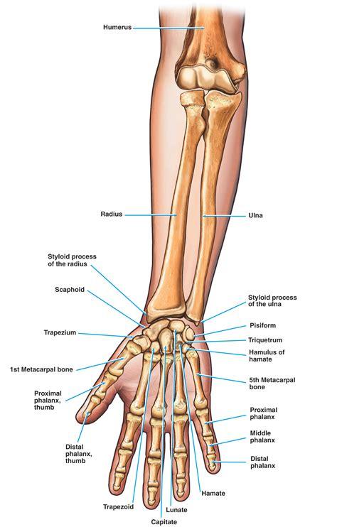 Common Causes Finger Stiffness The Orthopaedic Institute