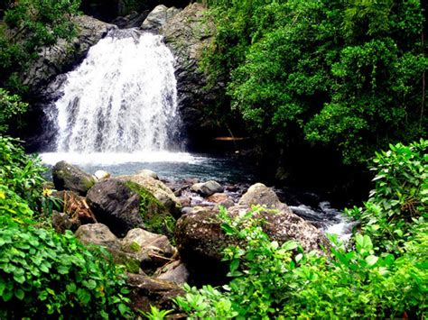 Eco Friendly Things To Do In Jamaica
