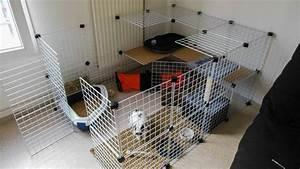 Maison Pour Lapin : enclos interieur j 39 adopte un lapin habitats sympa ~ Premium-room.com Idées de Décoration