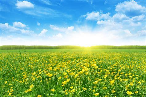 Life Is Strange Desktop Background Spring The Vernal Equinox New Beginnings