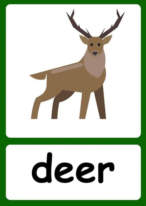 forest animal flashcards  forest background