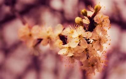 Spring Petals 4k