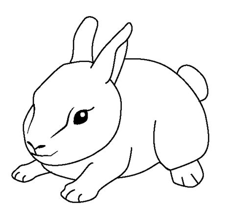 Coloring Animal Pictures by 25 Baby Animal Coloring Pages Ideas Weneedfun
