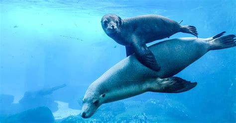 taronga seal