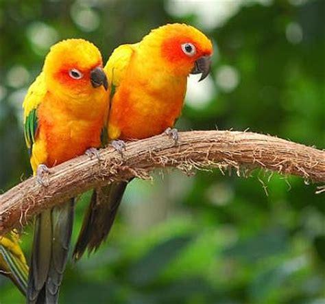 stars animals wallpapers  cute love birds pair